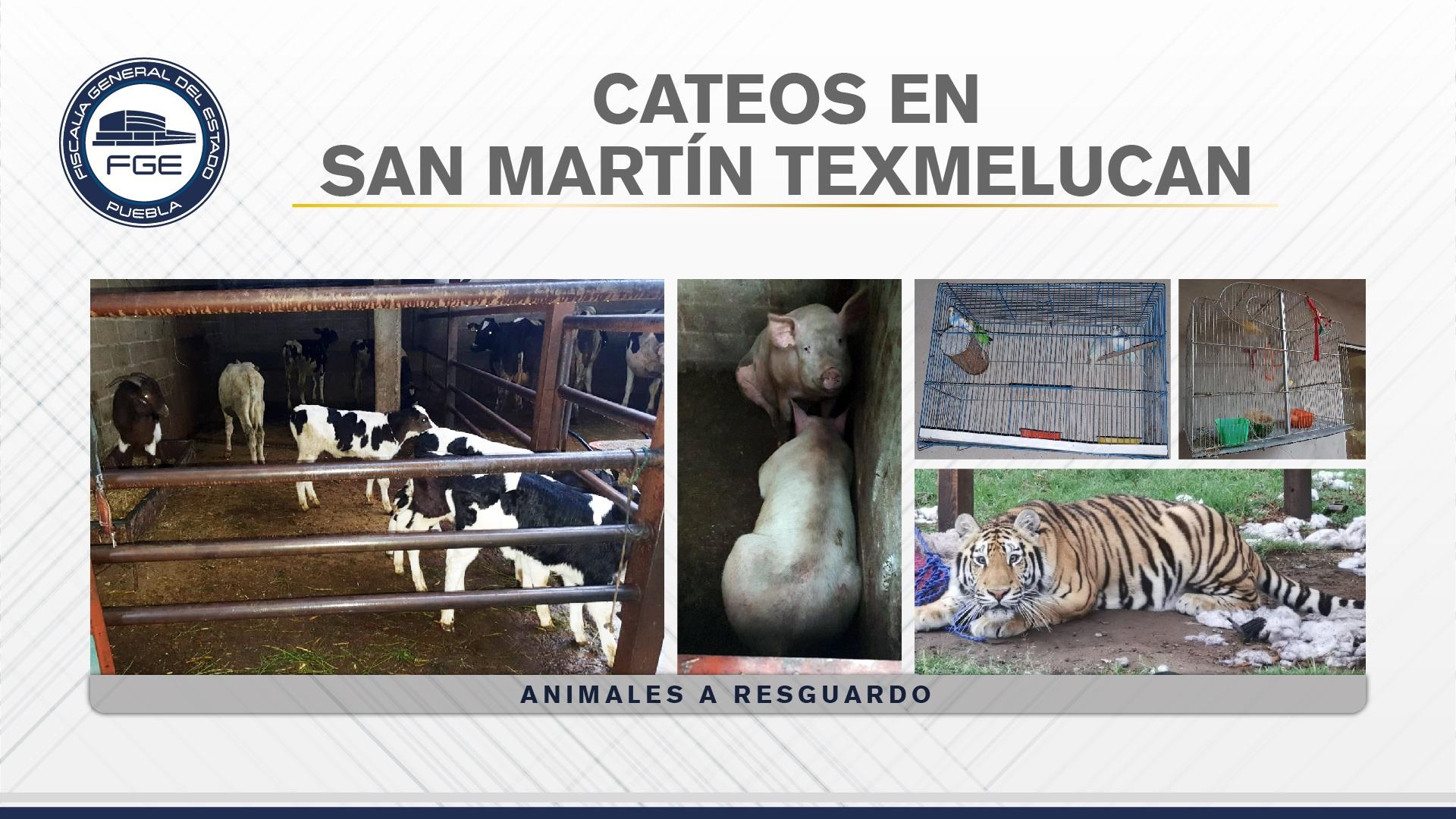 Cateos San Martín texmelucan 04